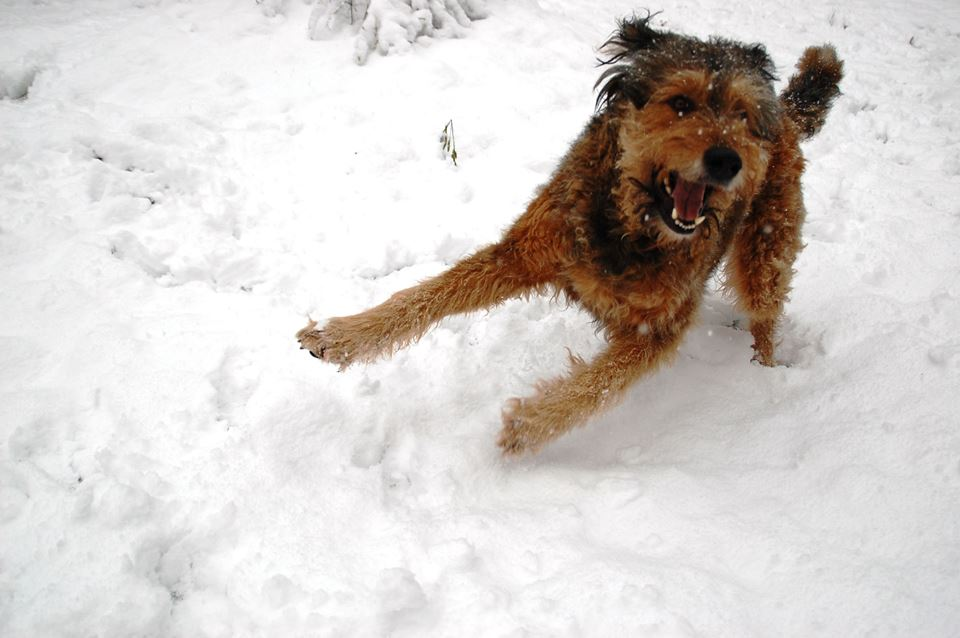 Fett-weg-Spritze funktioniert auch bei Hunden